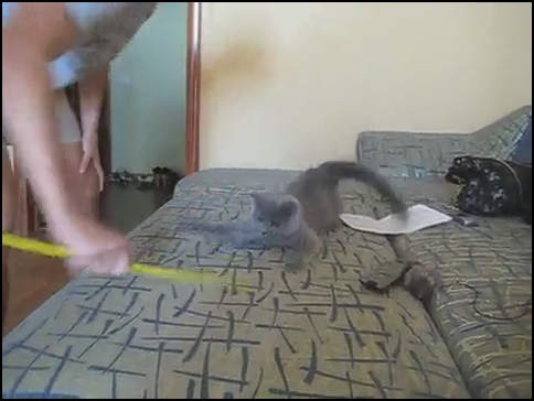 Видео – Кот смешно играет на диване