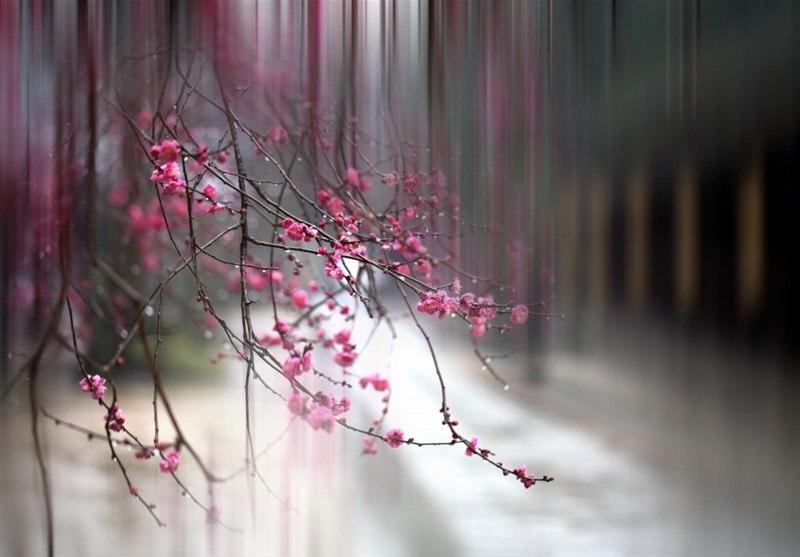Идеи для фото – Hikaru Arai. Природа в картинках [10 шт]