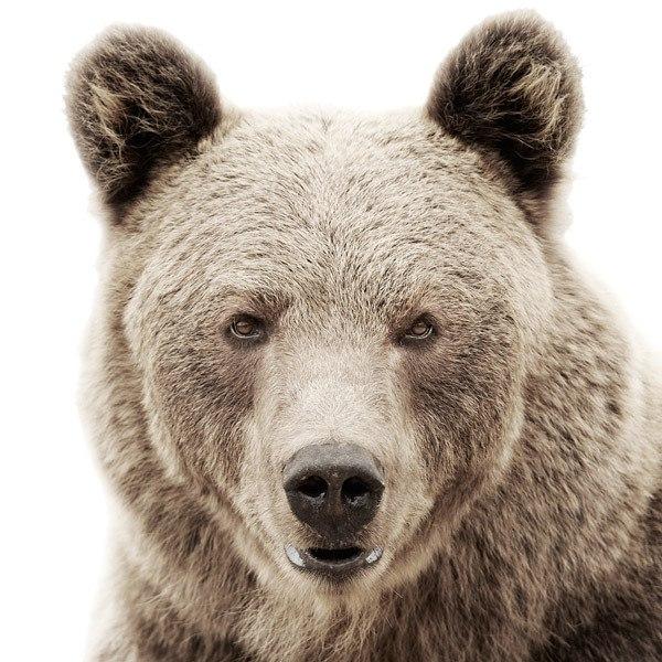 Идеи для фото – Шикарные портреты животных от Morten Koldby [10 шт]