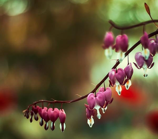 Идеи для фото – Безумно красивые цветы в фотографиях Oer Wout [10 шт]