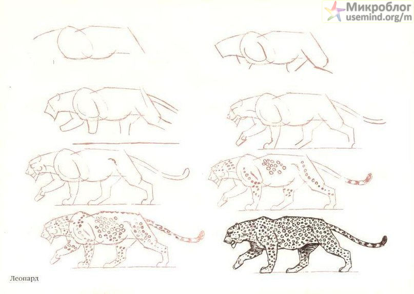 Как нарисовать кошку и леопарда?