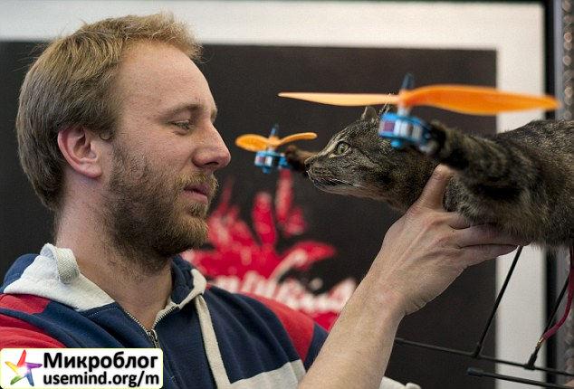 Вертокотолет. Кот, который летает. Картинки. Видео