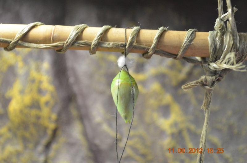 Выставка бабочек, пауков и других насекомых