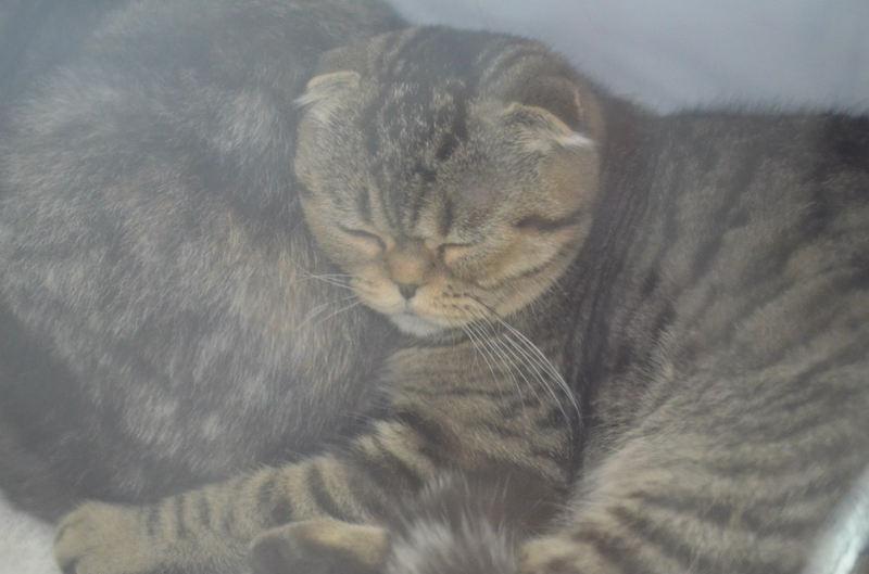 Фотографии котов с выставки