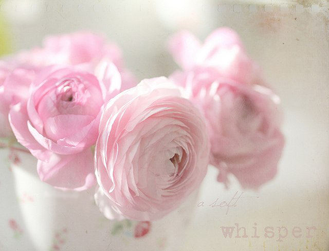 Идеи для фото – Фотографии цветов от Aina Apelthun [9 шт]