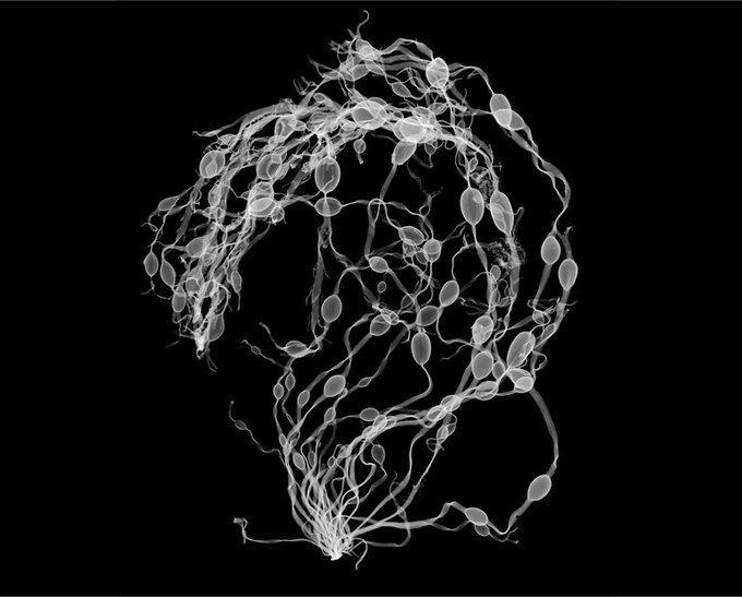 Фотографии предметов под рентгеновскими лучами [43 шт]