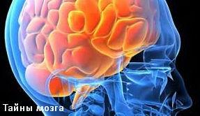 Тайны мозга. Всё проходит через мозг
