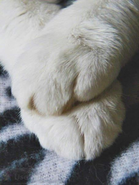 Фото котовых лап