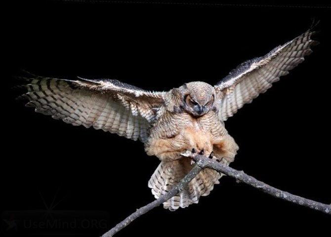 Картинки совы