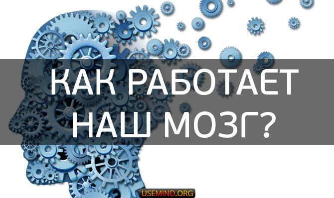 Тренировка для ума. Как работает наш мозг?