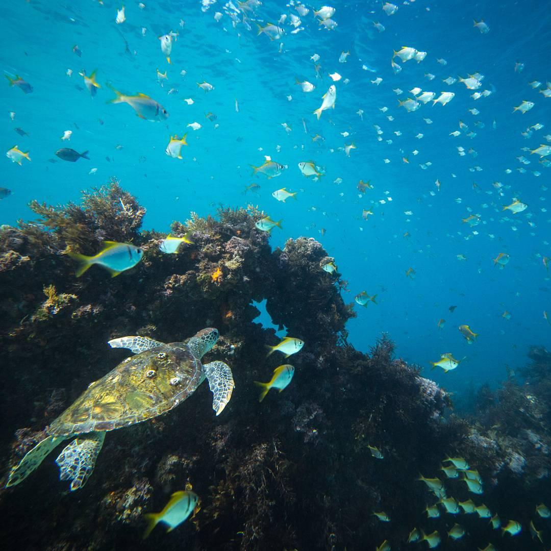 Удивительные подводные снимки – маленькие рыбы в ловушке внутри живых медуз